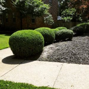 Shrub Trimming Services St. Louis, MO.