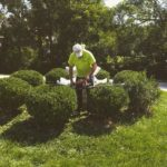 Tree and Hedge Trimming St. Louis, MO.