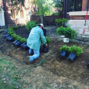 Garden And Softscaping Design Services St. Louis, MO.