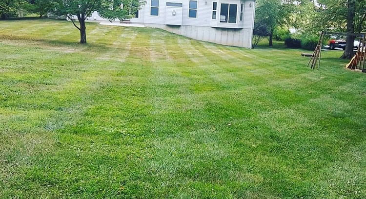 Lawn Overseeding Services St. Louis, MO.