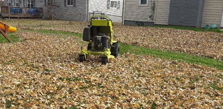 Leaf Cleanup And Removal Services St. Louis, MO.