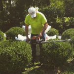 Tree and Hedge trimming Services in St. Louis, MO.