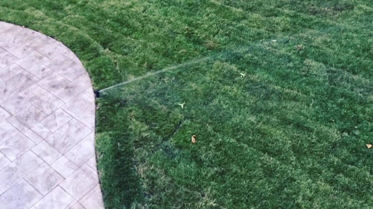 Grass Seed Or Sod For Your New Lawn